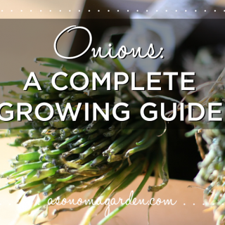 Onions: A Complete Growing Guide