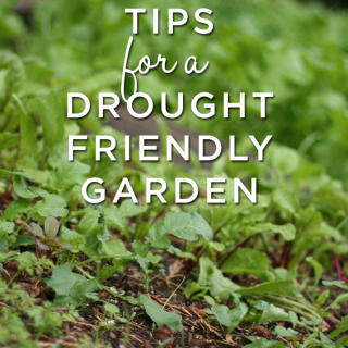 Tips everyone can use to help garden in a drought year.