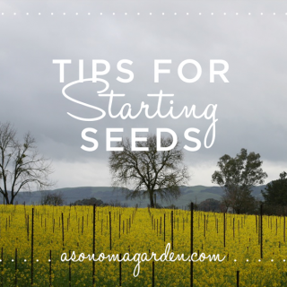 Tips for Starting Seeds