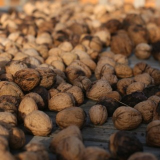 fresh picked walnuts drying out before storage