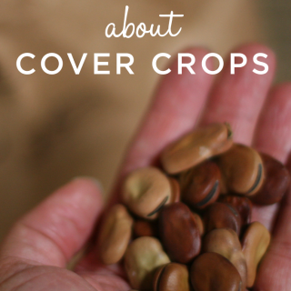 Learn all about cover crops