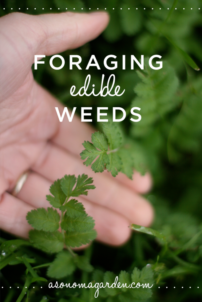 Great write up about foraging for edible weeds in your own backyard