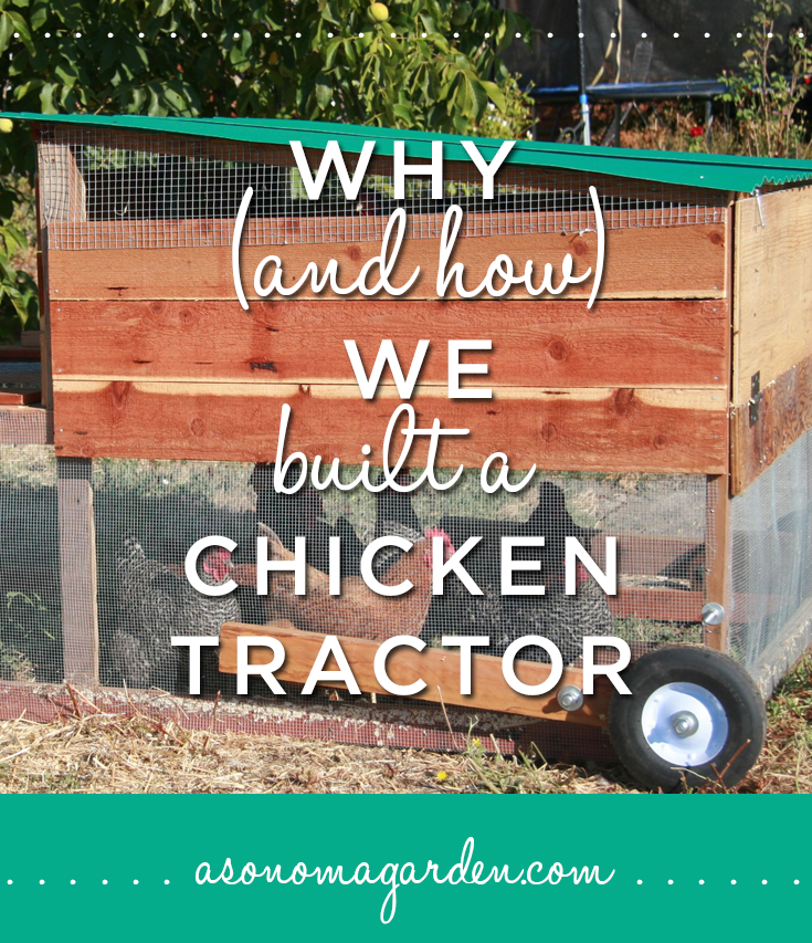 How and why we built a chicken tractor for Big chicken tractor