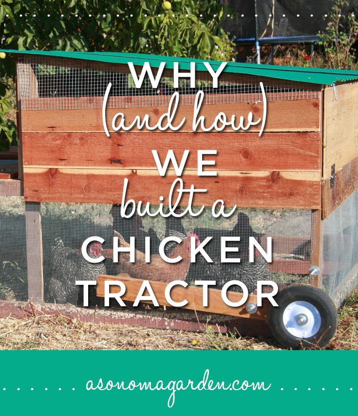 Chicken-Tractor